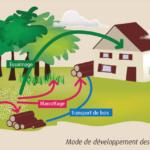Mode de développement des termites