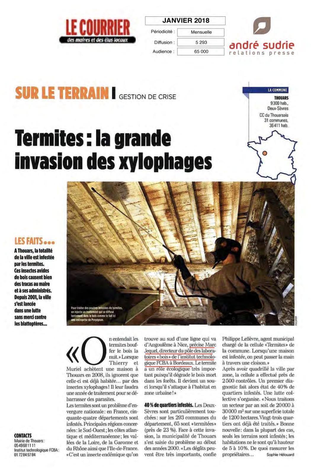 Termites la grande invasion des xylophages